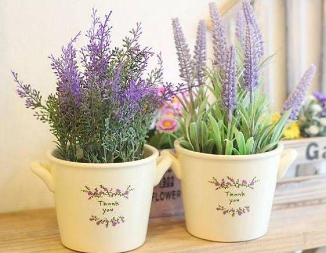 Lavender-cay-trong-phong-ngu_opt